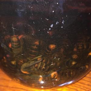 hornet-liquor